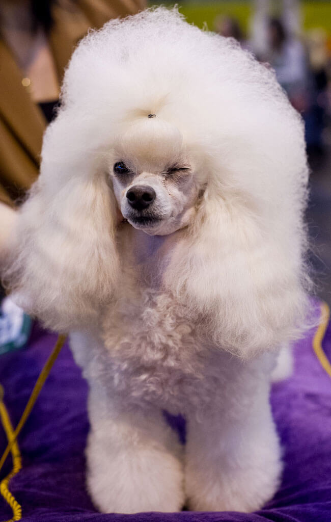 INS_Crufts_Day_two_9