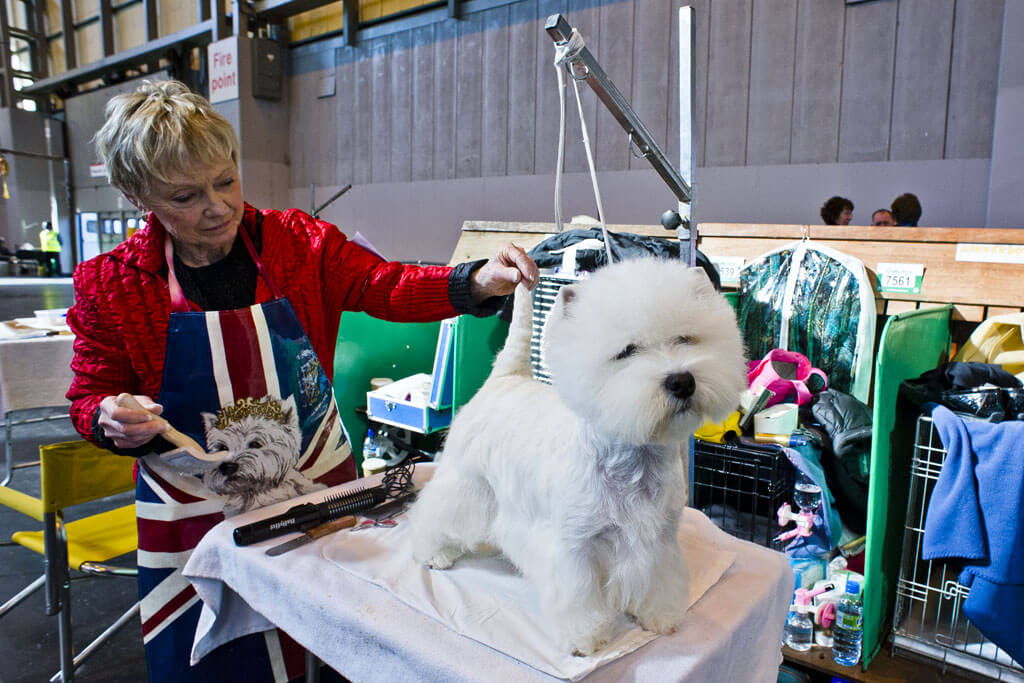 INS_Crufts_day_two_13