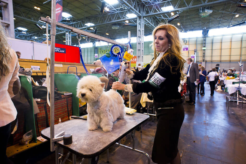 INS_Crufts_day_two_15