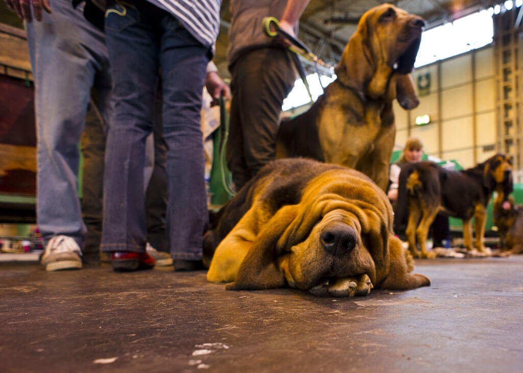 INS_Crufts_day_two_2